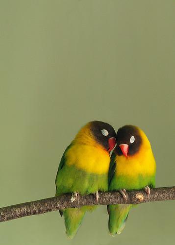 two birds صور جميلة عن الطبيعة والطيور