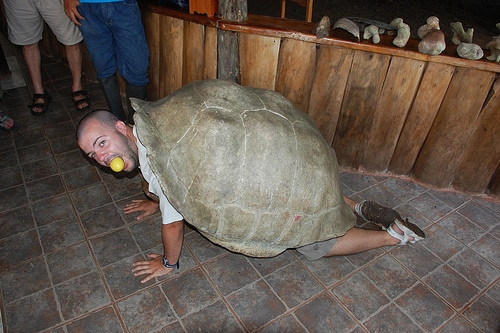 tortoise-eating.jpg