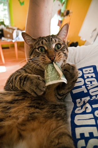 cat eating dollar bill